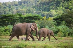 Elephants3 copy copia
