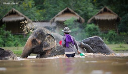 Elephants4 copy copia
