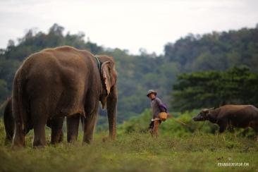 Elephants5 copy copia